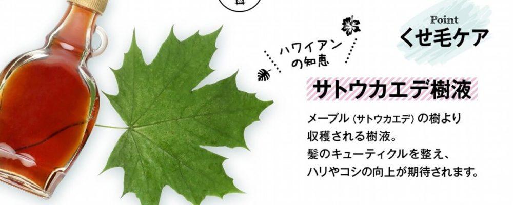 ハワイ由来ボタニカル成分サトウカエデ樹液