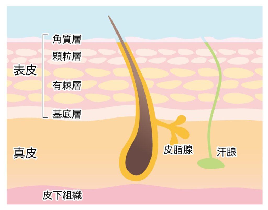 毛穴の黒ずみ・開き・角栓の対策